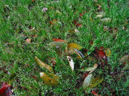 weed green fallen leaves