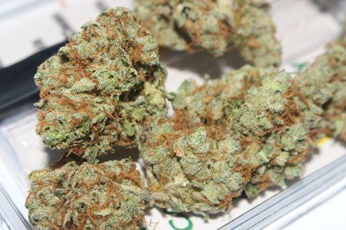 weed cannabis marijuana