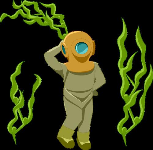weed kelp underwater