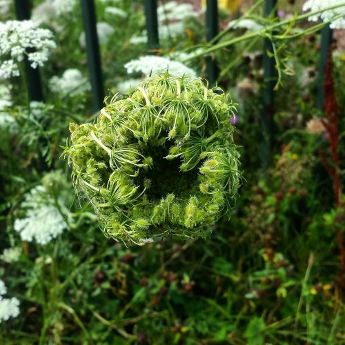weeds nature plants