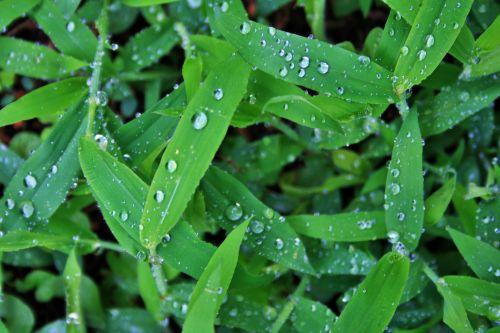 Weeds Glistening After Rain