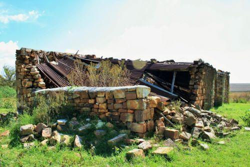 Weeds Growing Among Ruins