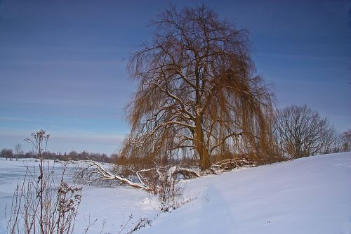 weeping willow winter lake