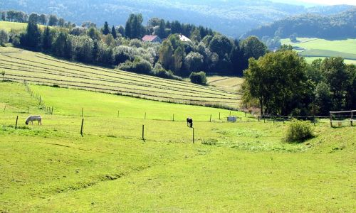 Pasture With Horses