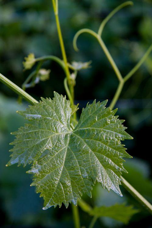 weinbatt winegrowing entwine