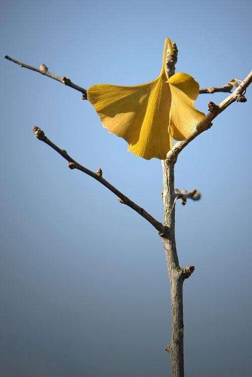 welkes sheet autumn yellow sheet