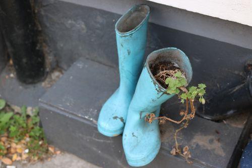 wellington boots boots plant