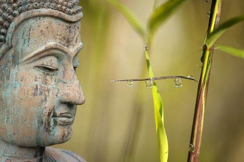 sveikatingumo, Reed, atsipalaidavimas, meditacija, lašelinė, lašas vandens, Veidrodinis, buda, bambuko, augalas