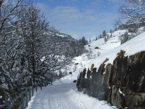 wengen path alps