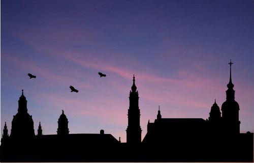 west sky birds