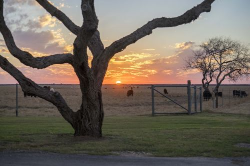 west texas ranch sunset