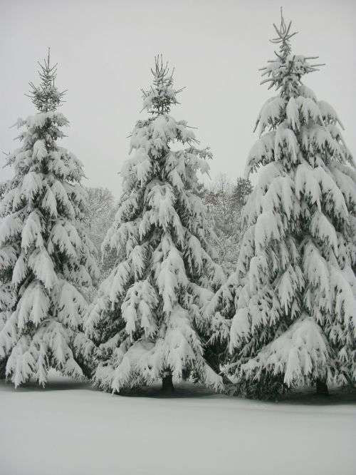 west virginia trees outdoors