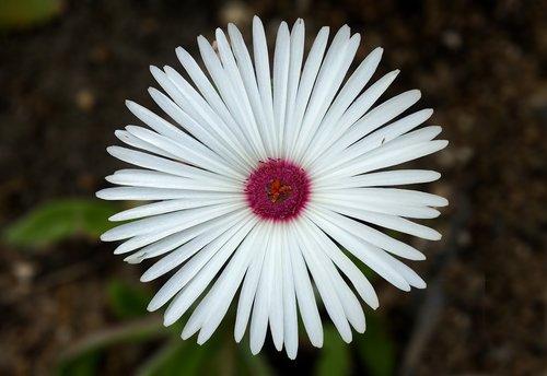 western debt and the handling  portulaca grandiflora  send cute