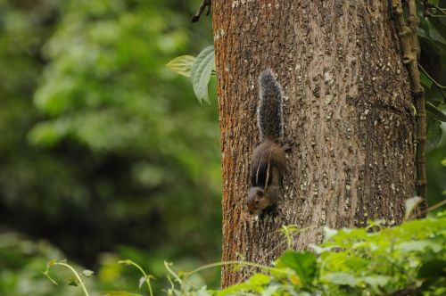 western ghats squirrel wildlife valparai