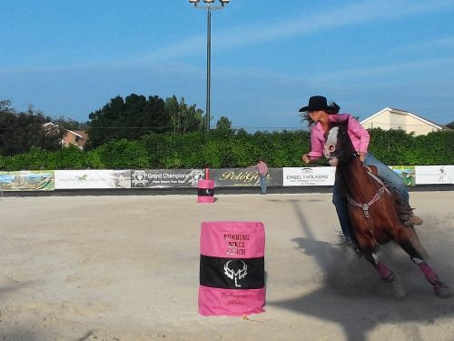 western riding wellington horses