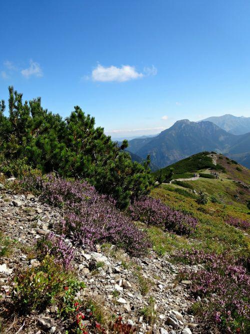 vakarų tatras,kalnai,kraštovaizdis,gamta,augmenijos kalnas