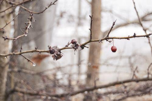 wet cold gooseberry