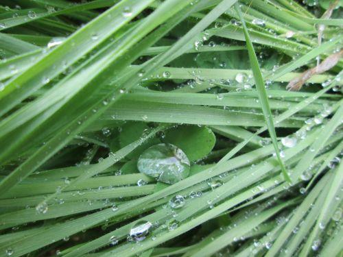 dobilas, žolė, tekstūra, gamta, vanduo, lašai, šlapias, šlapias žolė ir dobilas