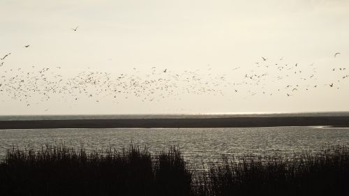 wetland birds nature