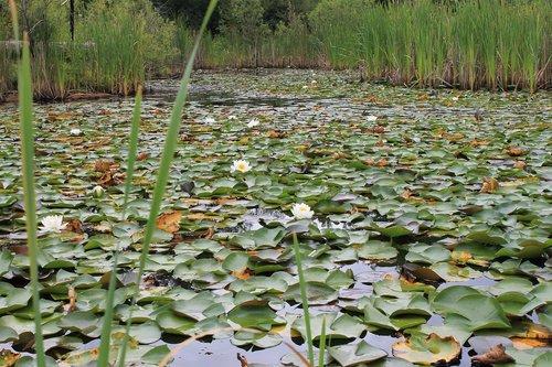 wetland  marshland  pod