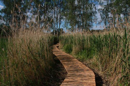 wetland hate pavement