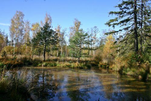 wetland lake pond