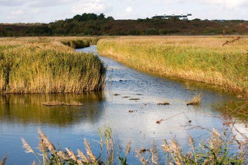 wetlands westleton suffolk
