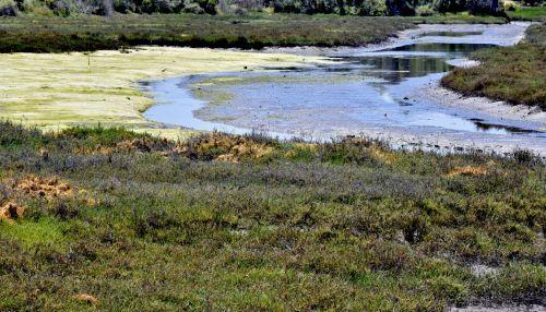 Wetlands Scenic