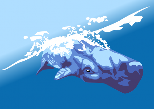 whale pot whale cachalot