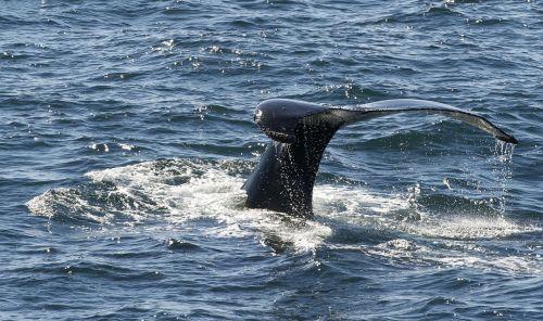 whale marine life south pole