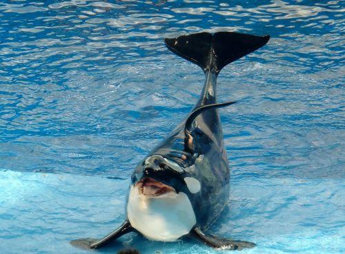 whale mammal huge