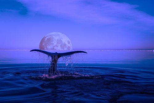 whale breaching marine life