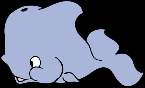 whale baby whale whale calf
