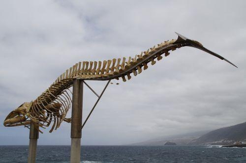 banginių skeletas,skeletas,wal,skulptūra,Tenerifė,didelis,paminklas,figūra,šiaurinė pakrantė,statula,Atlanto pakrantė,kaulas,žinduolis,Paruošimas,miręs