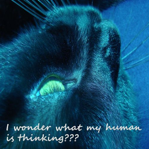 What Is My Human Thinking?