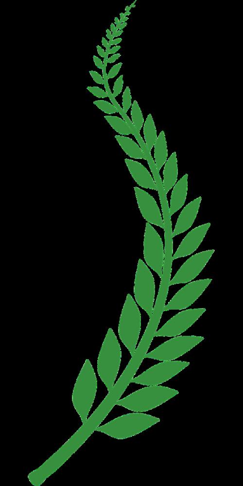 wheat illustrator vector