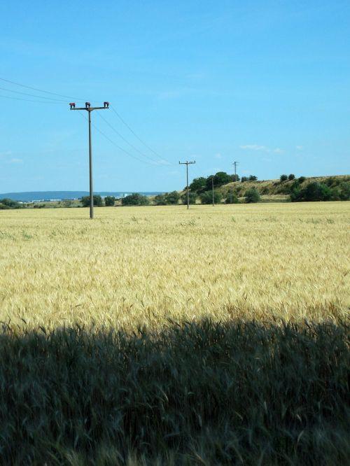 wheat field wheat mast