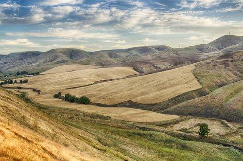 wheat fields  rolling fields  idaho