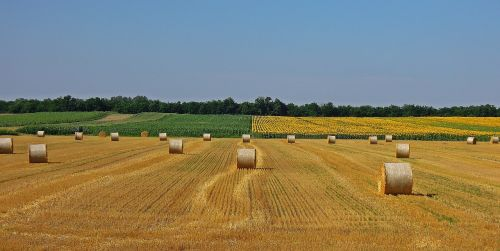 wheatfield straw bale agriculture