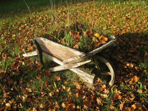 wheeler leaf autumn