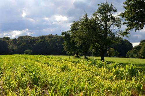 corn fields reported monoculture