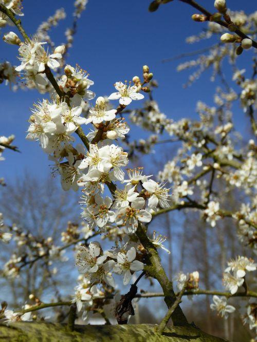 white flowers blossom