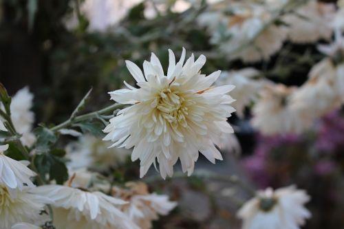 white nature pure