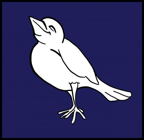 white bird vertebrates