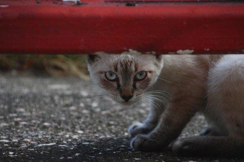 white  cat  hiding