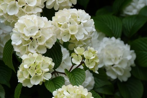white  flower  spring