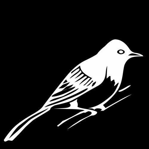 White Blue Jay