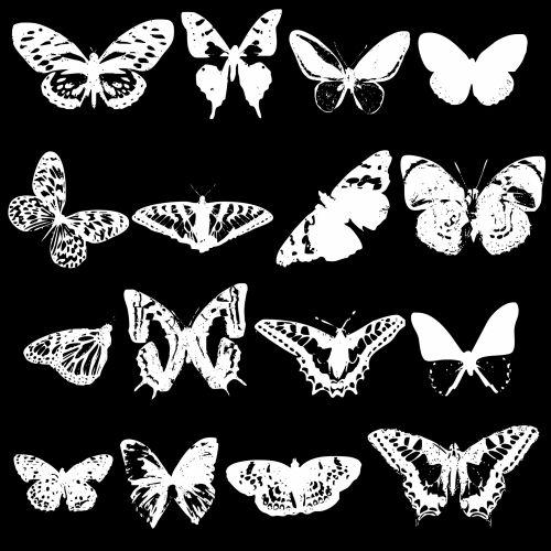 White Butterflies