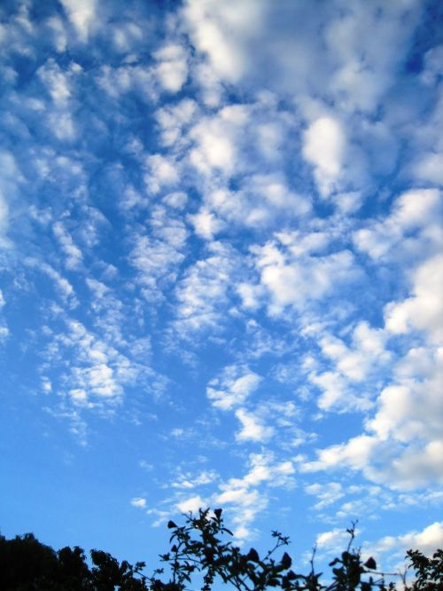 White Flocky Cloud
