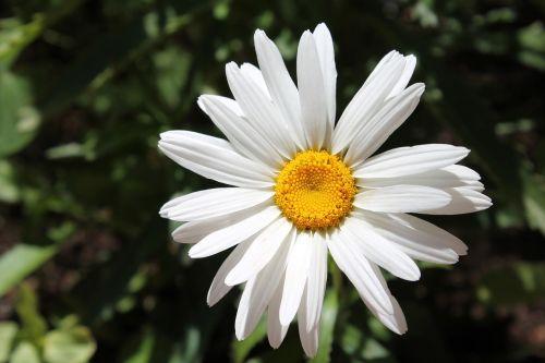 white flower bloom flower